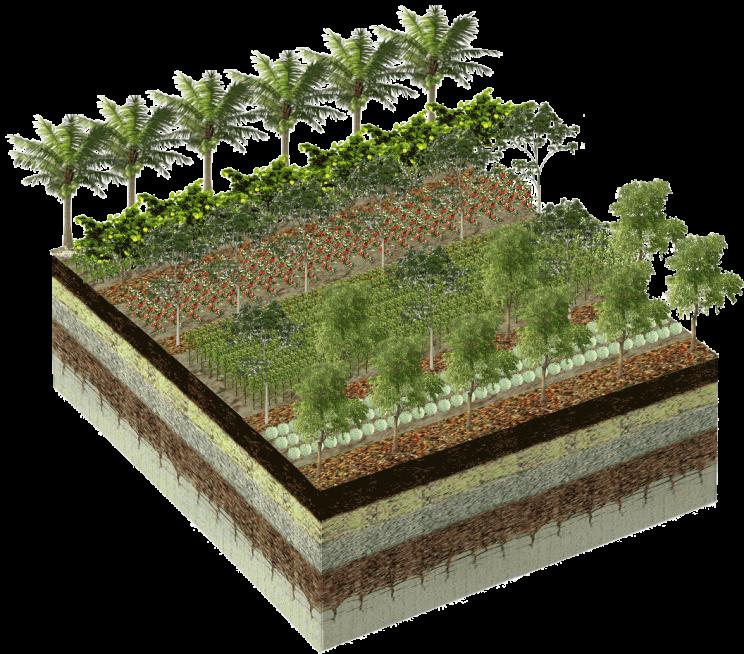 pixlr-farm2