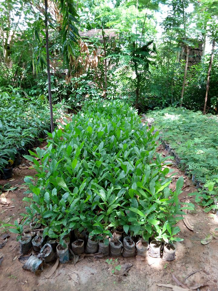 These 1000 tree seedlings were put in the fields of eGro farmers in the season of 2017.